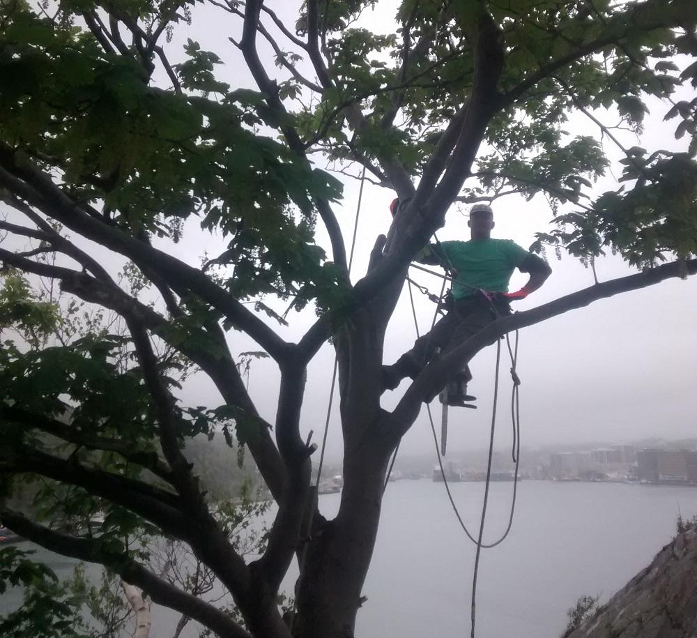 Tree Removal in St. John's