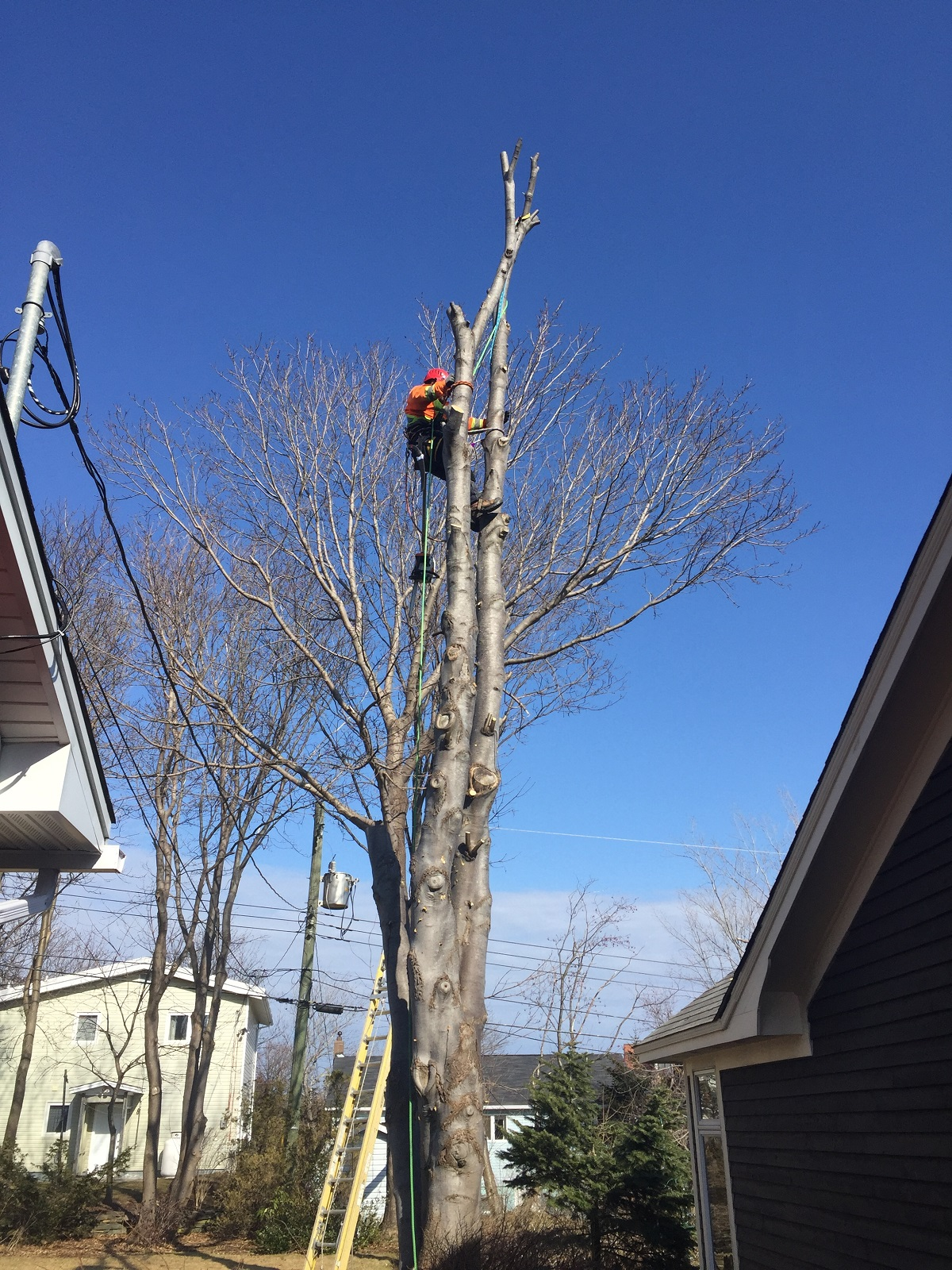 emergency tree service provided in St. John's