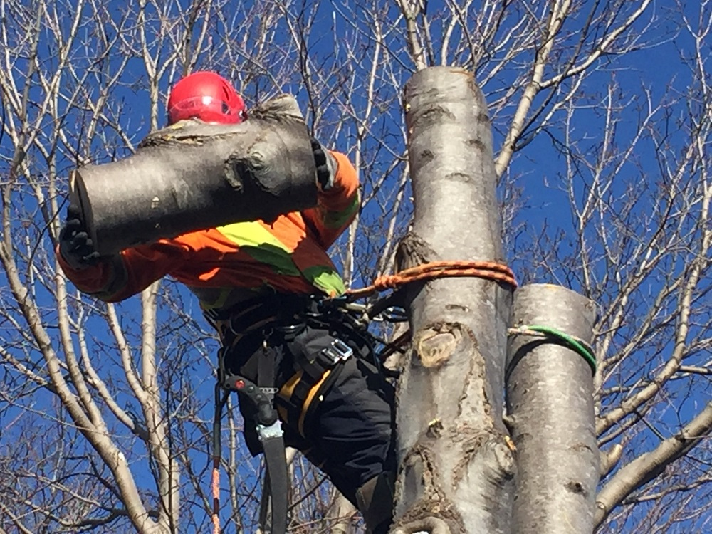 newfoundland tree pruning service