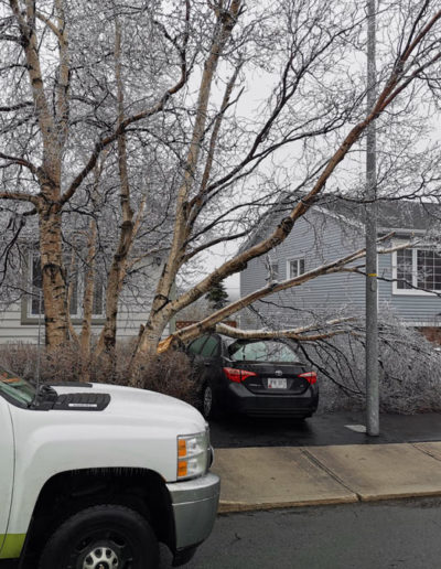tree-damage-from-storm-in-NL