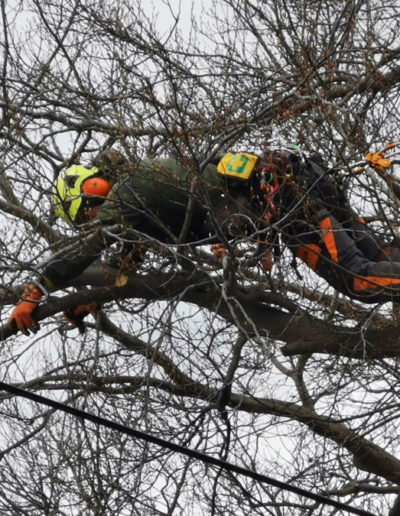 tree-pruning-in-NL