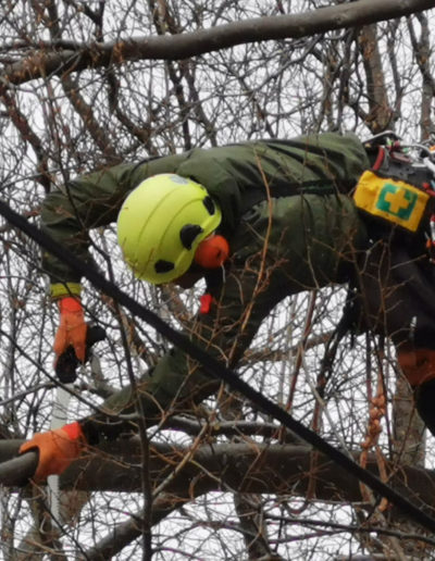 tree-pruning-in-st.-johns