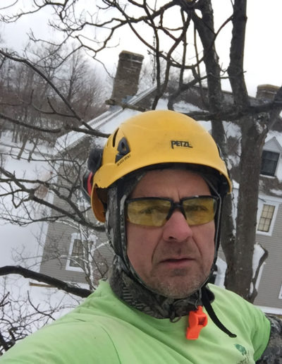 tree-removal-in-winter